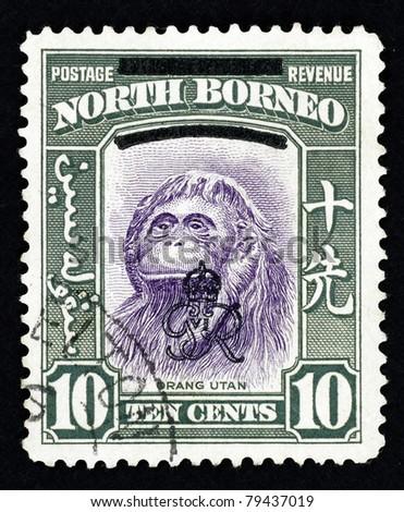 NORTH BORNEO - CIRCA 1947: Stamp printed in North Borneo showing a Borneon Orangutan which is scientifically known as Pongo pygmaeus, circa 1947.