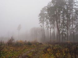 North Europe. Lithuanian forest. November. Autumn. Dark and cold. Heavy fog. Mist in nature. Low-lying cloud. Bad visibility. Air temperature and dew point is less than 2.5°C. Condenses water droplets