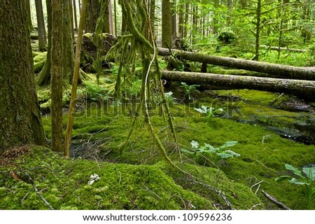 North Pacific Forest Theme. Washington State, U.S.A. Olympic National Park