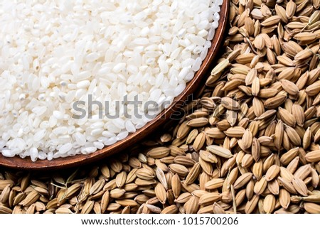 Northeast rice and rice #1015700206