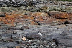 Northeast seacoast ocean-side cliff of metamorphic and layered sedimentary rock iron deposit