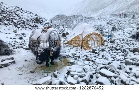 Northern ascent to Mount Everest, Tibet #1262876452