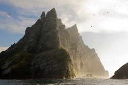 Northern gannets seen on top of the remote and steep cliffs of St Kilda. The Saint Kilda archipelago contains the largest colony in Europe with more than 60 000 nests.