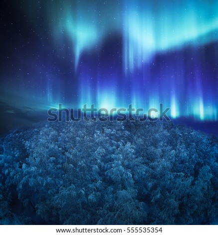 Northern Lights above the forest #555535354