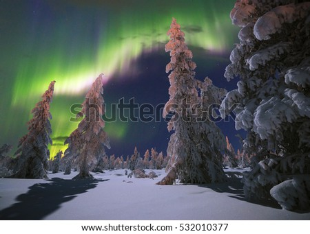 Northern Lights - Aurora borealis over snow-covered forest. Beautiful picture of massive multicoloured green vibrant Aurora Borealis, Aurora Polaris, also know as Northern Lights in the night sky  #532010377