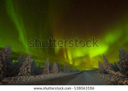 Northern Lights - Aurora borealis over snow-covered forest. Beautiful picture of massive multicoloured green vibrant Aurora Borealis, Aurora Polaris, also know as Northern Lights in the night sky  #538063186