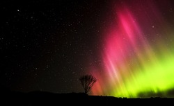 Northern Lights over Rowan tree, Isle of Skye, Scotland