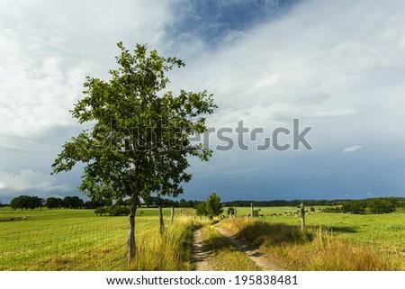 Northern Poland./ Farm Road