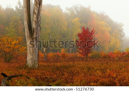 Northern swamp in the fall