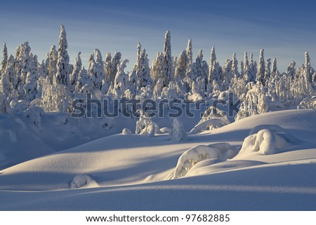 Northern Ural Mountains. Fantastic snow figures on trees. Frosty morning on border with Siberia.