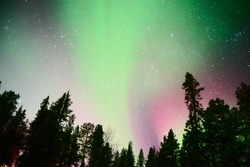 Northernlights with trees in front of in Kiruna  (Aurora Camp), sweden. (Febraury 2017)