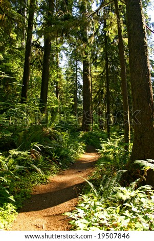 northwest pacific rainforest trail