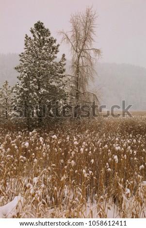 Northwest Wintry Landscape  #1058612411