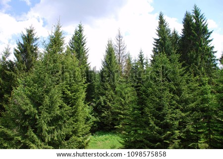 Norway spruce forests create a healthy microclimate and scenic landscapes, making the air a healthier one. In fact, the healing properties of this forests have been confirmed by medical researchers.