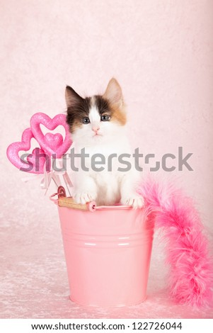 Norwegian Forest cat kitten sitting inside pink bucket pail container with pink feather boa and pink hearts on pink background