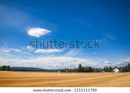 Norwegian rural landscape with traditional red wooden barn houses and golden wheat field on a bright summer day #1215151789
