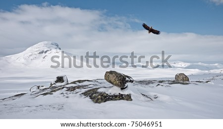 Norwegian winter landscape at easter with a low flying eagle over some rocks and with a mountain summit and clouds in the background
