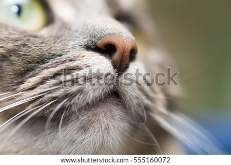 nose and mouth of a cat, close-up