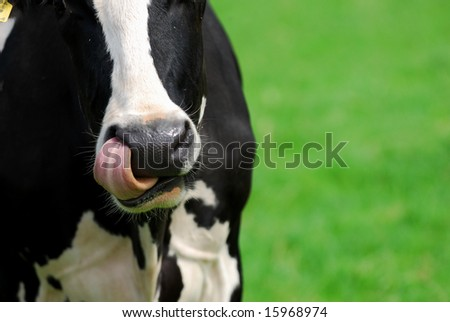 Nose picking in the field. - stock photo