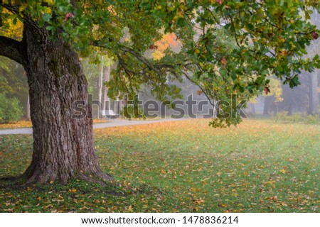 Nostalgic autumn feeling in the park. Old oak tree in foreground with misty atmosphere. White bench and fall leaves on ground. Tranquil, peaceful, emotion #1478836214