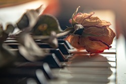 Nostalgic motive. A withered rose lies on the piano keys.