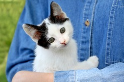 Not a purebred kitten lies in the hands of its owner.Young girl in a denim t-shirt holding her cat,outdoor.