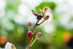 Not a real insect sitting on a branch. The plastic ladybug is made by hand. Home decor.