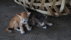 not focus image, two stray kittens in a dirty corner, waiting for food from their mother