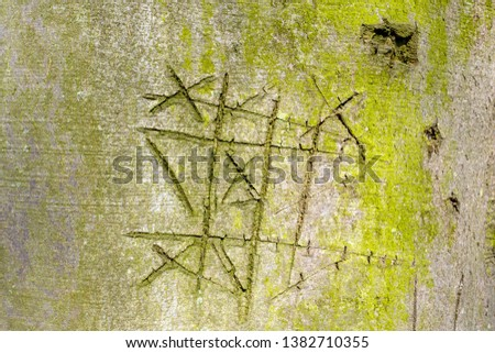 Notched beech tree bark with the game noughts and crosses, boter kaas en eieren, tic-tac-toe, in The Netherlands. Stockfoto ©