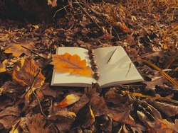 Notebook and pen on a background of autumn foliage. Autumn still life. Notepad and fountain pen. Notepad in the foliage. Poetry and creativity. Unity with nature and freedom.