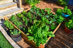 Nothing is fresher than food from your own garden. Planted in spring, this raised backyard garden bed is loaded with a variety of herbs and vegetables ready to be harvested in summer.