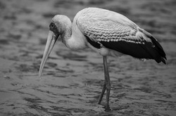 Nothing more peaceful than seeying this bird wander in the shallow waters of the Kruger National Park.