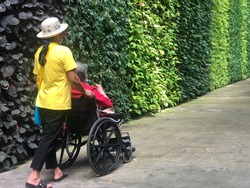 Nov 21, 2020 - Pattaya : A female caregiver take an elderly female family member on a wheelchair wandering around the garden, on the concrete pedestrian path with green wall of ornamental plants.