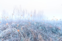 November dreamy frosty morning. Beautiful autumn misty cold sunrise landscape. Fog and hoary frost at scenic high grass meadow.