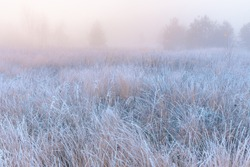 November frosty morning. Beautiful autumn misty sunrise landscape. Foggy morning and hoary frost at scenic high grass meadow.