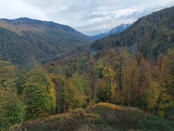 November sunny day. Bright autumn trees at the edge of a small hillock glade. Mountains covered with dense forest, and snowy peaks against a blue sky with dense clouds.