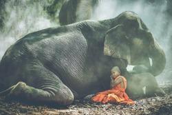 Novice Buddhist and elephant is sleeping.