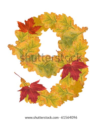 Number of autumn leaves . Number 9