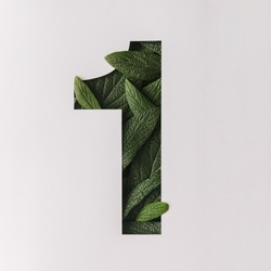 Number one shape cutout with green leaves. Nature concept. Flat lay.