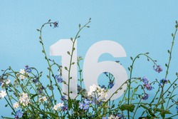Number sixteen among blue forget-me-not flowers. Birthday, anniversary, jubilee concept. For invitation, greetings or decoration cards.