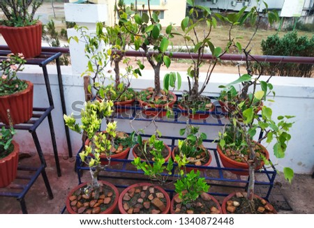 numerous collection of bonsai trees