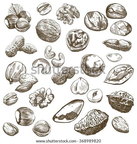 nut set sketches