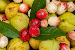 Nutmeg is the seed or ground spice of several species of the genus Myristica. Nutmeg (Myristica fragrans) is a tree plant originating from the Banda Islands, Maluku, Indonesia.