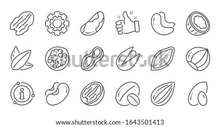 Nuts and seeds line icons. Hazelnut, Almond nut and Peanut. Sunflower seeds, Brazil nut, Pistachio icons. Walnut, Coconut and Cashew nuts. Linear set. Quality line set.