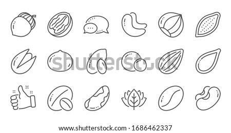 Nuts and seeds line icons. Hazelnut, Almond nut and Peanut. Walnut, Brazil nut, Pistachio icons. Cacao and Cashew nuts. Linear set. Quality line set.