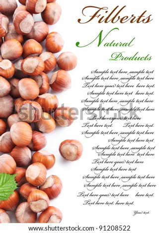 Nuts filberts isolated on white background. Space for text on the right