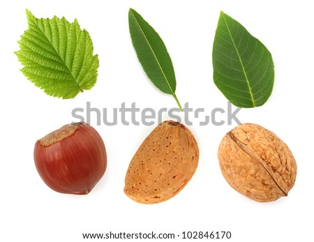 Nuts with leaves