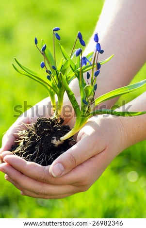 Nuturing Growth. Spring Flowers In Human Hands Stock Photo ...