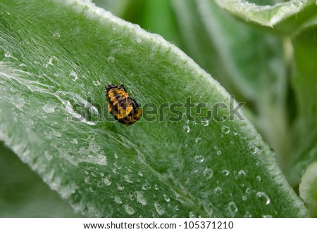 nymph in the rain - stock photo