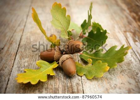 Oak acorns on wooden desk